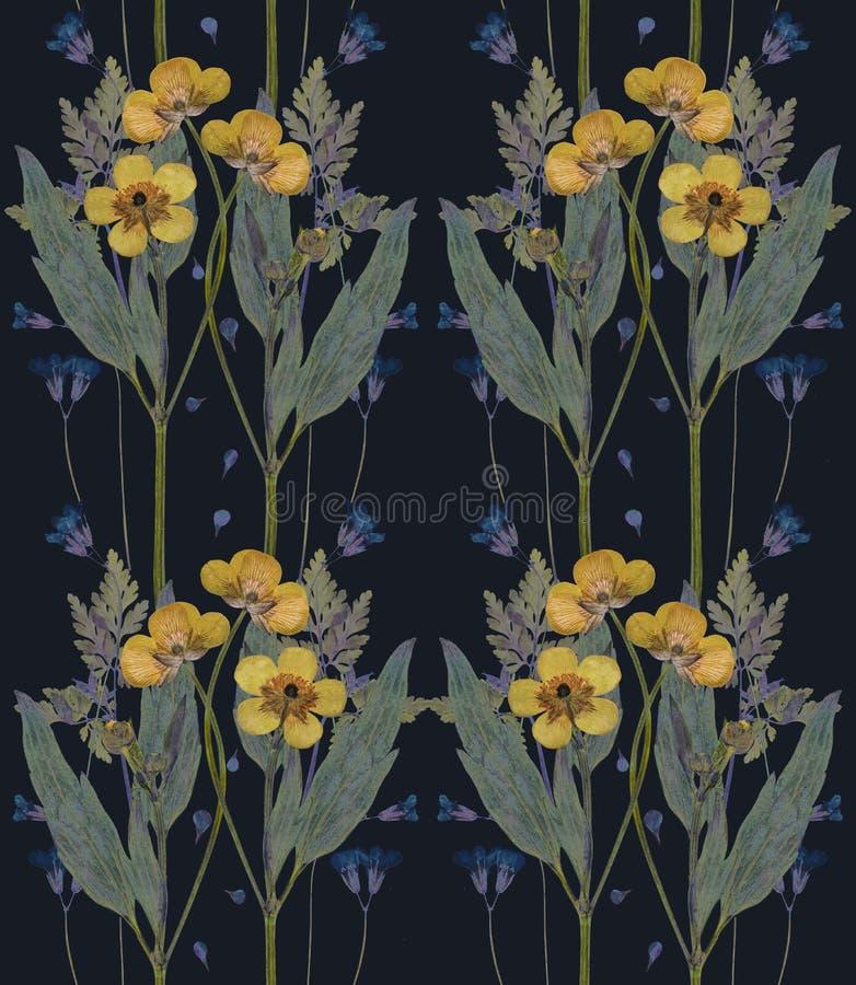 Отжатая и высушенная картина цветков лютика на черноте бесплатная иллюстрация