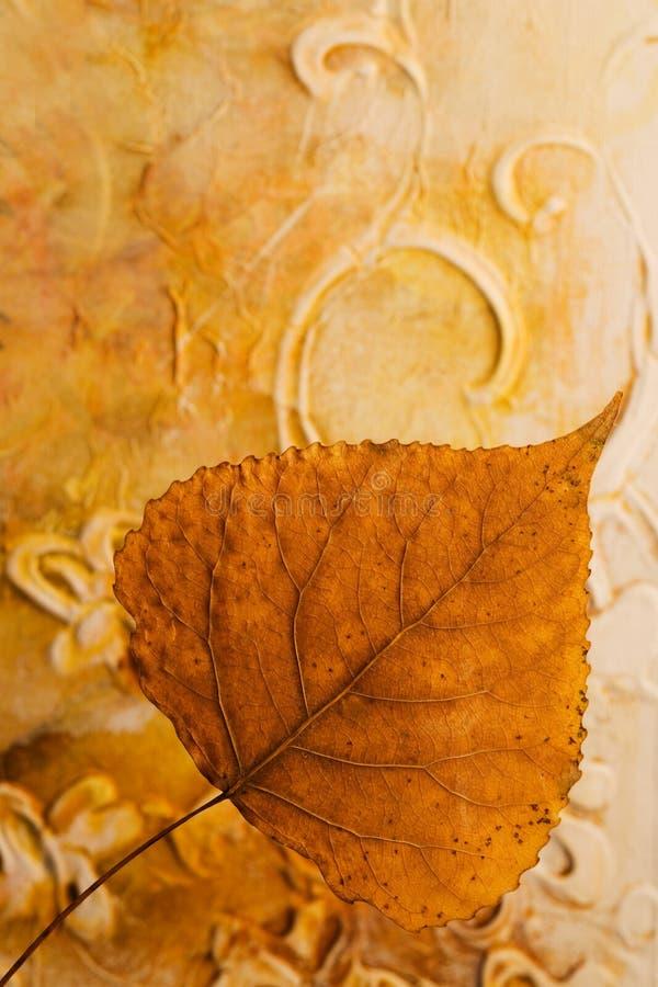 отжатые листья стоковые изображения rf