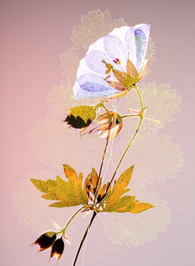 Отжатые цветок и лист стоковое изображение