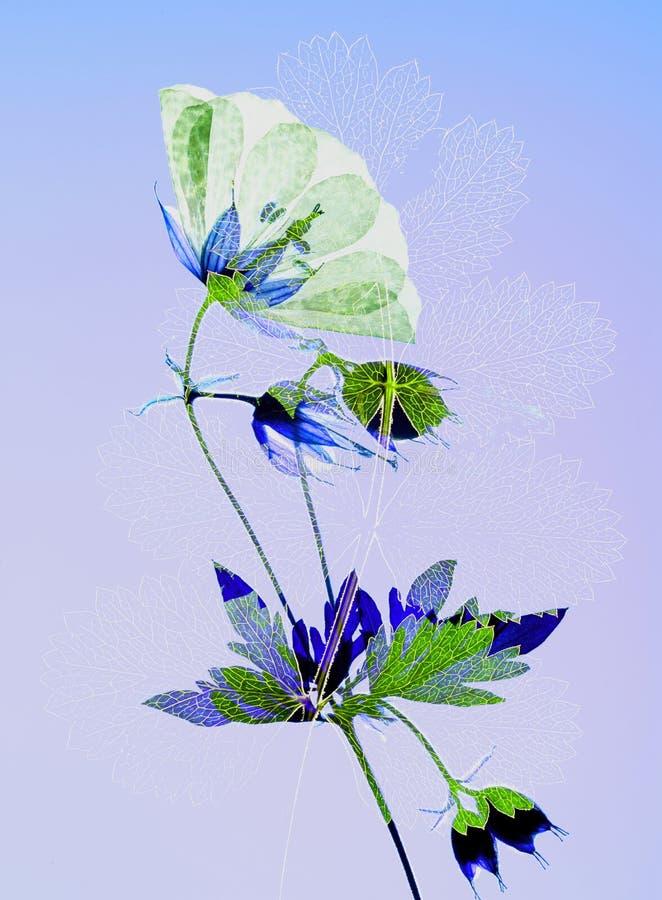 Отжатые цветок и лист стоковое изображение rf