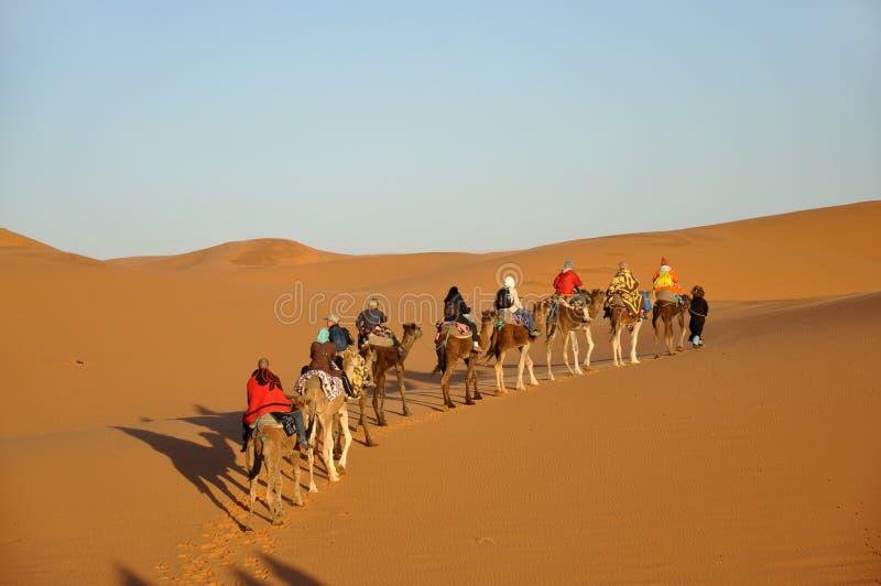 отключение Сахары пустыни верблюда стоковые изображения