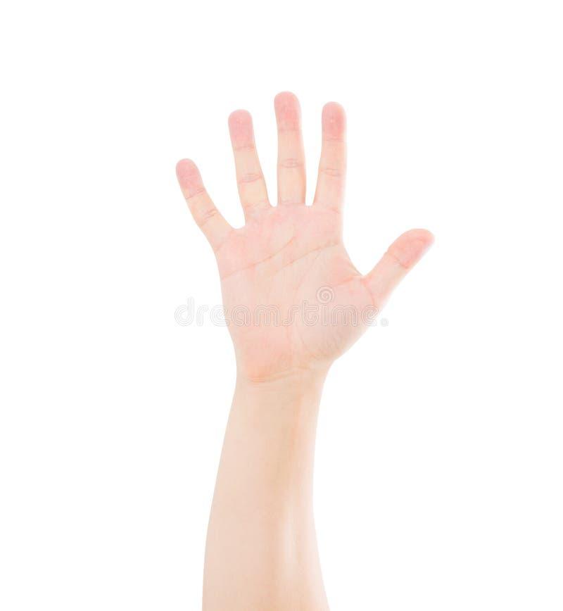 Открытая китайская азиатская рука изолированная на белизне Насмешка вверх скопируйте космос шаблон уговариваний стоковые фотографии rf