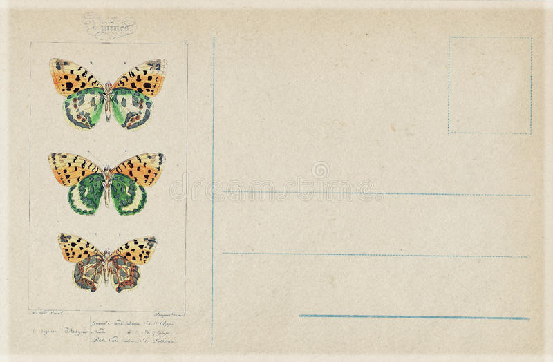 Открытка бабочки античного винтажного стиля ботаническая иллюстрация вектора