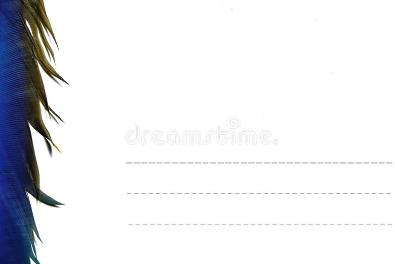 Открытка пер крыльев на белом backgound стоковое изображение