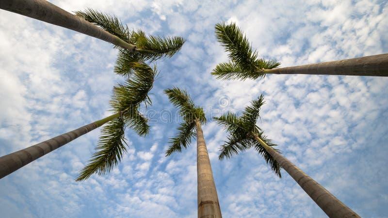 открытки ладони grunge конструкции кокоса тип старой ретро стоковое фото
