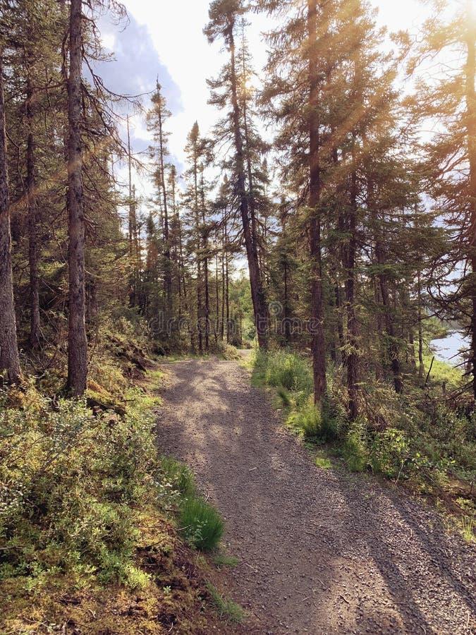 Отличный осенний тропа в Лабрадоре, Канада с эффектами освещения стоковое изображение