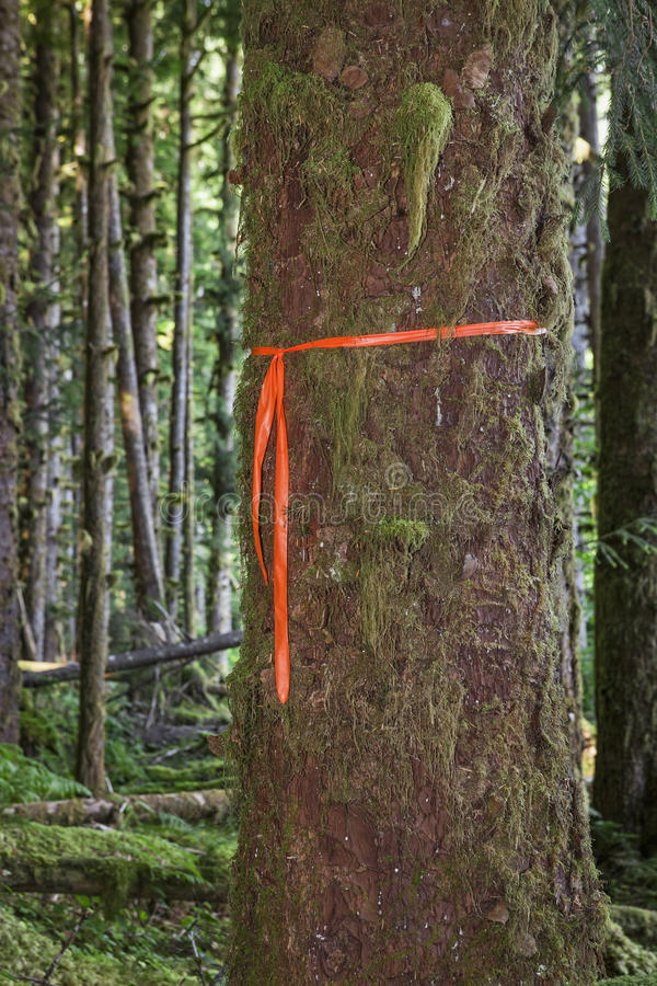 Отметка следа на дереве стоковое изображение rf