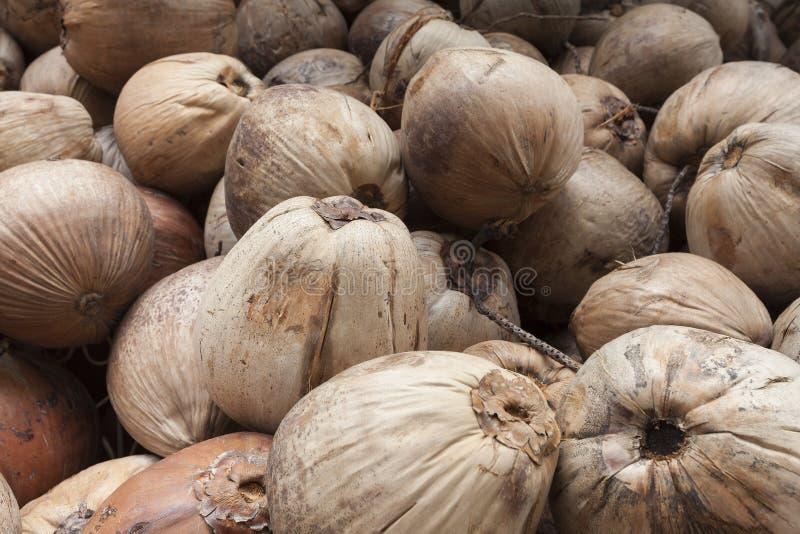 Отмелый фокуса к плодоовощ кокоса, предпосылке Tex стены виньетки стоковое фото rf
