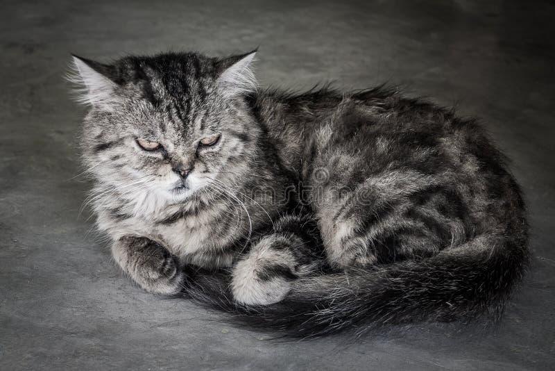 Отожмите кота стороны стоковое фото