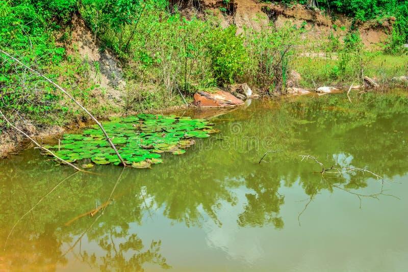лотос лагуны bali стоковые изображения rf