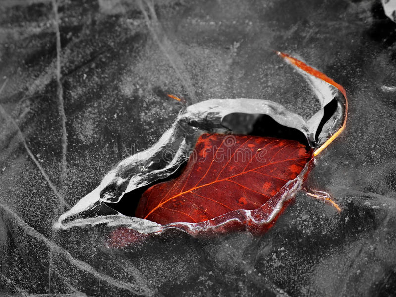 Отпечаток льда стоковые изображения