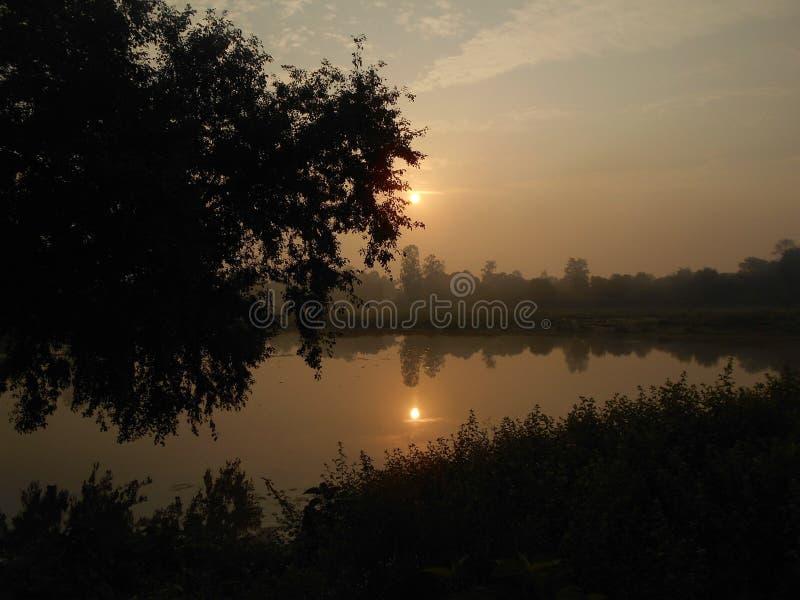 Отражая солнце за деревом стоковое изображение rf