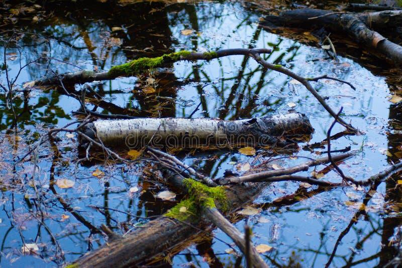 Отражение в лужице со старыми деревьями стоковая фотография rf