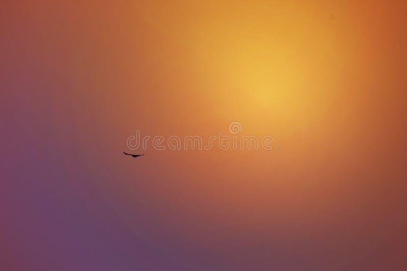 Отражение в небе, Дубай заходящего солнца, ОАЭ 21-ого июля 2017 стоковые изображения rf