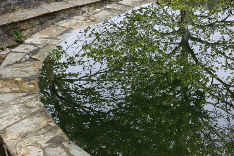 Отражение дерева в пруде стоковая фотография rf