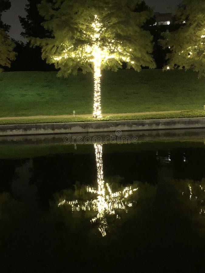 Отражение дерева стоковые изображения