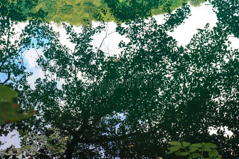 Отражение деревьев дуба и липы в озере стоковые фото