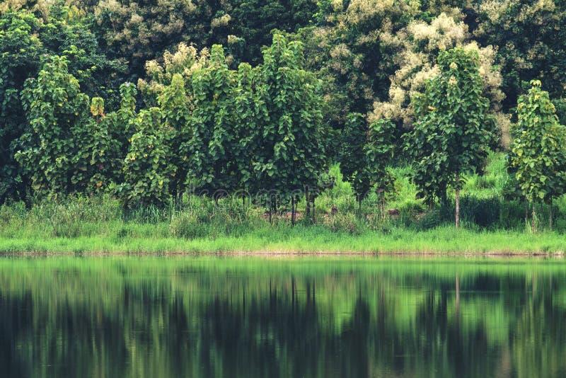 Отражение деревьев на воде в пруде с зелеными природой и горой стоковое фото rf