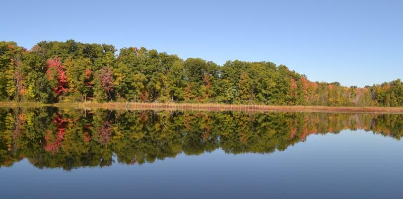 Отражение дерева падения на озере в Мичигане стоковое изображение rf