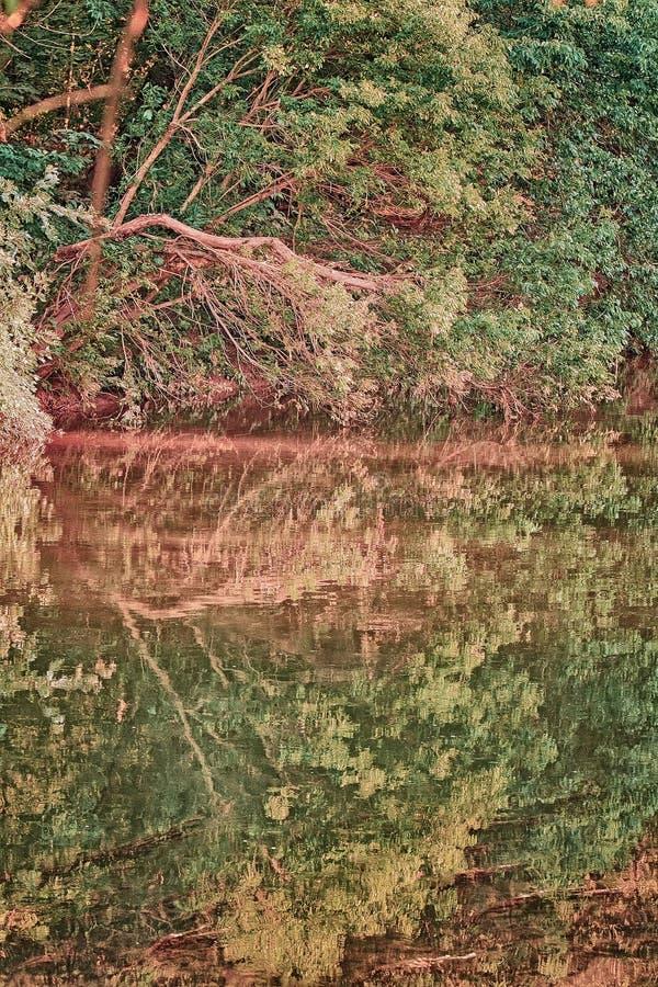 Отражение дерева стоковые изображения rf