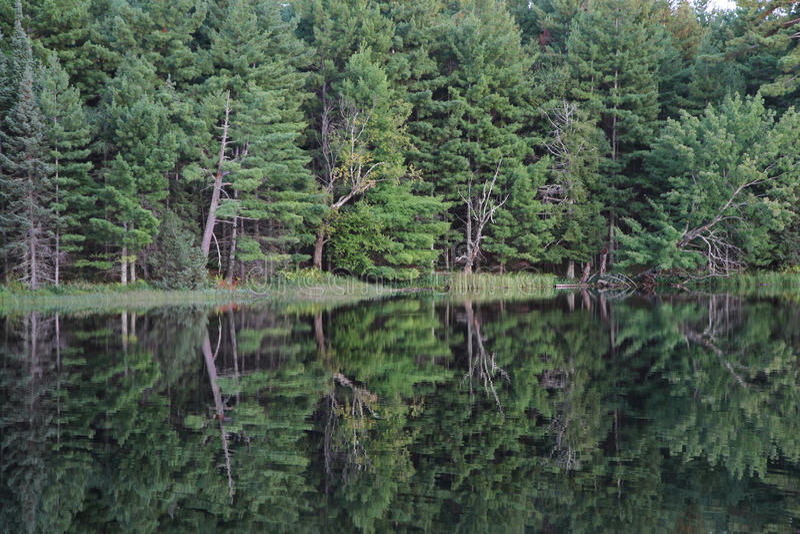 Download Отражение деревьев в озере стоковое изображение. изображение насчитывающей вода - 33733249
