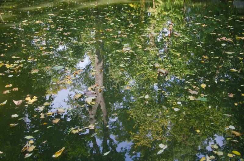 Отражение деревьев в пруде лиственно стоковые изображения rf