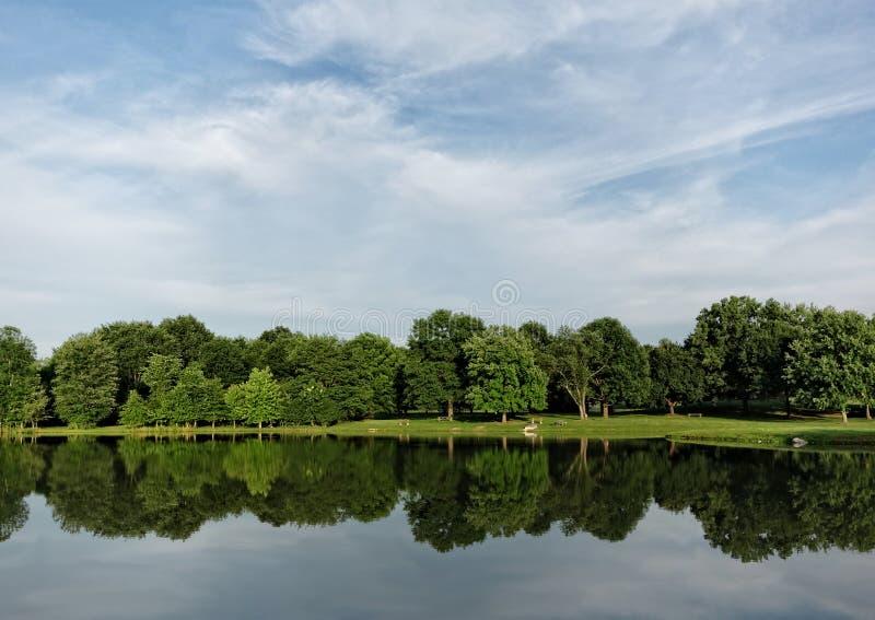 Отражение деревьев лета стоковое изображение rf