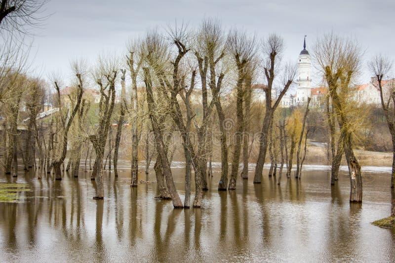 Отражение деревьев на воде. стоковые изображения rf
