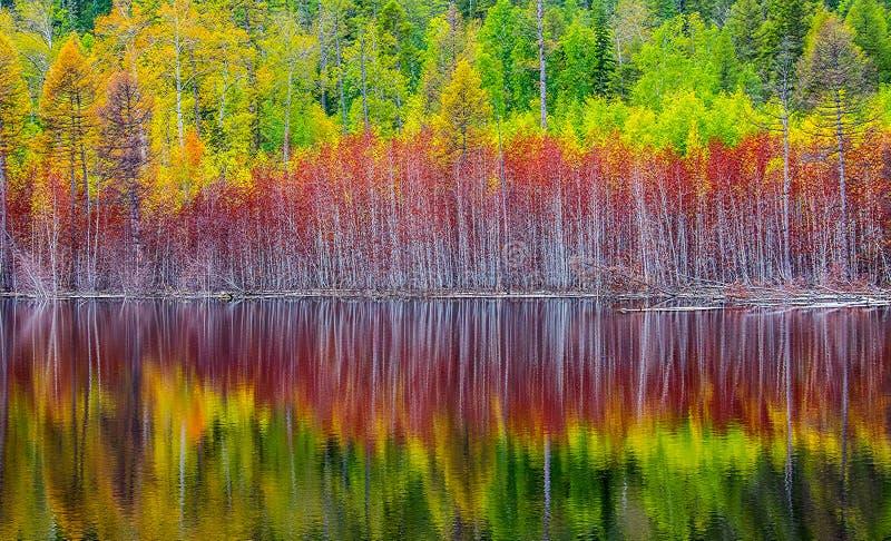 отражение леса осени в озере taiga стоковая фотография