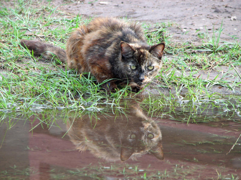 Отражение кота стоковые фото
