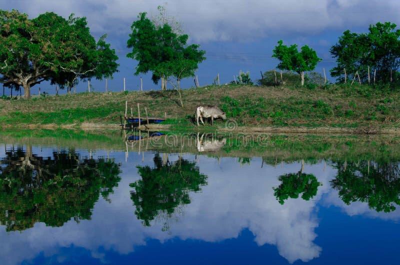 отражение ландшафта в лагуне в северовосточном sertão стоковая фотография rf