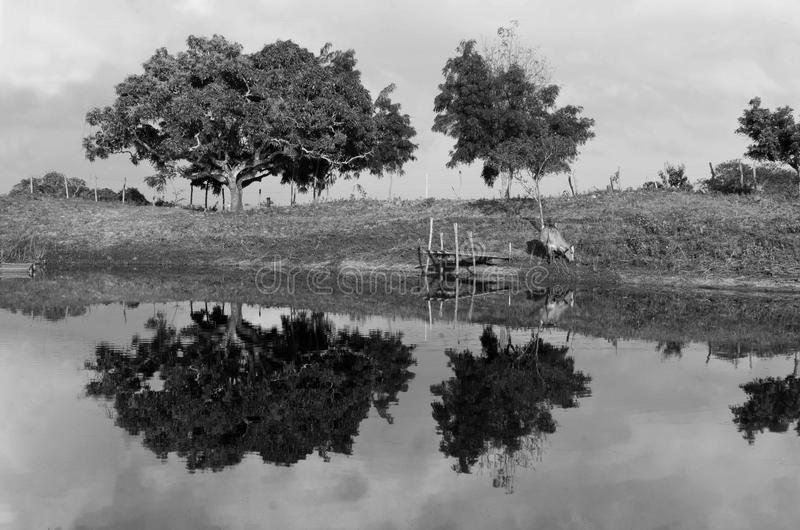 отражение ландшафта в лагуне в северовосточном sertão стоковое изображение