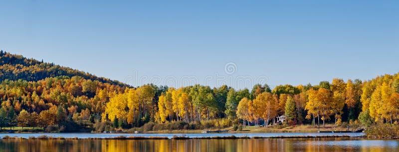 Отражение лиственной пущи в озере стоковая фотография rf