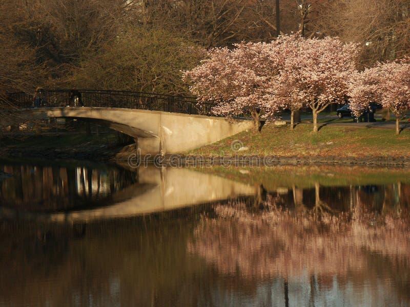 отражение моста стоковые изображения rf