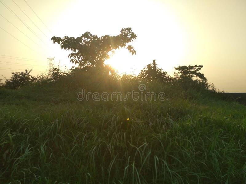 Отражение на зеленых листьях стоковое фото rf