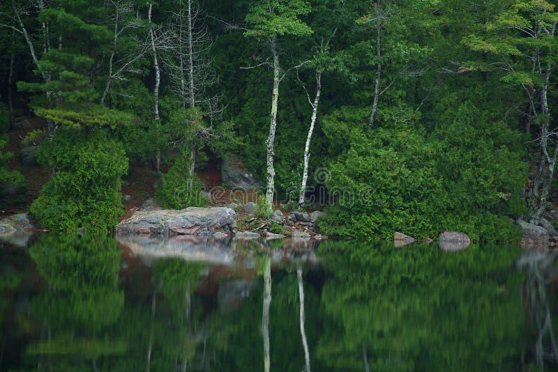 отражение пруда пузыря стоковая фотография