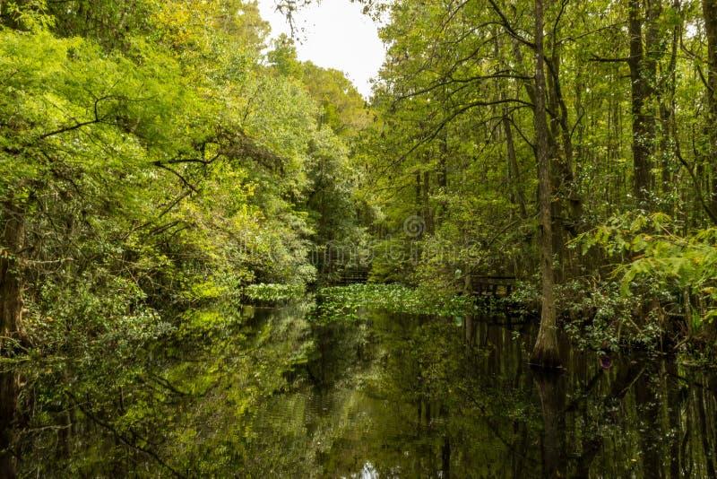 Отражение Swamplands стоковые фото
