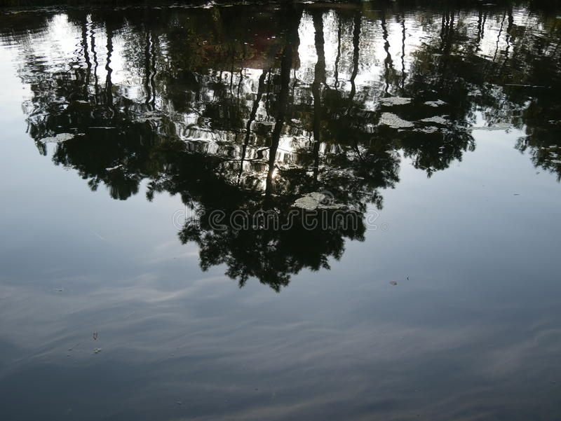 Отражение Tress на воде стоковые фото