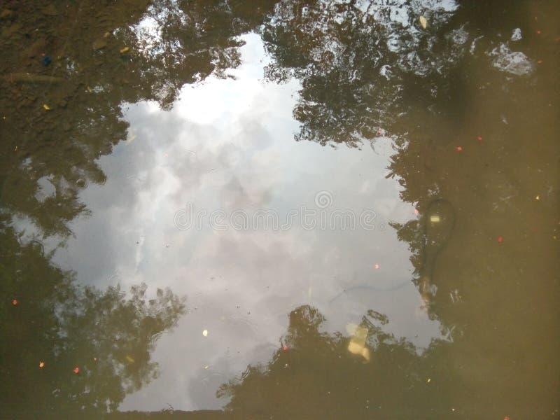 Отражения воды дерева стоковые изображения rf