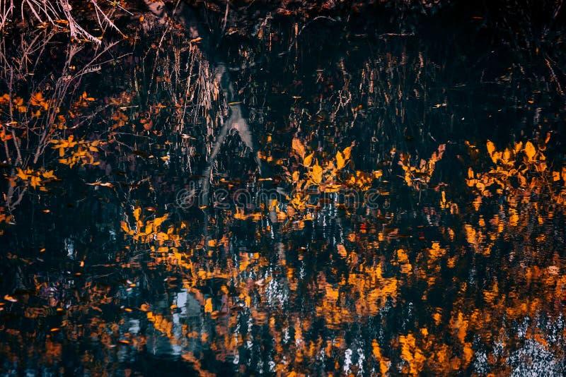 Отражения в воде стоковое изображение rf