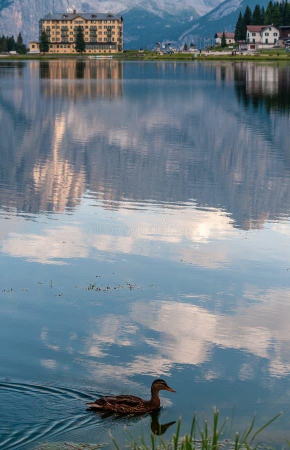 Отражения в озере Misurina стоковые изображения rf