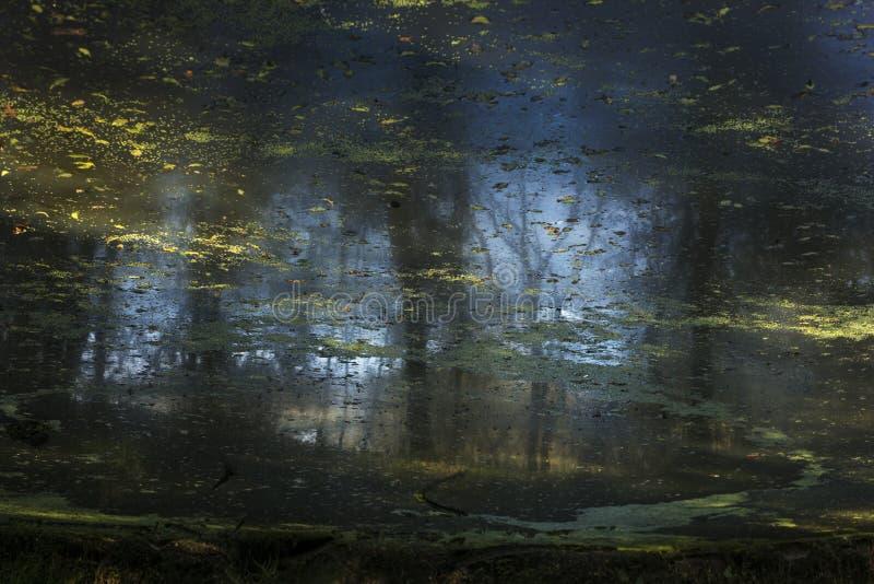 Отражения в пруде стоковая фотография