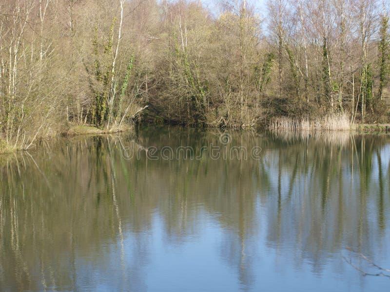 Отражения деревьев на озере стоковое фото