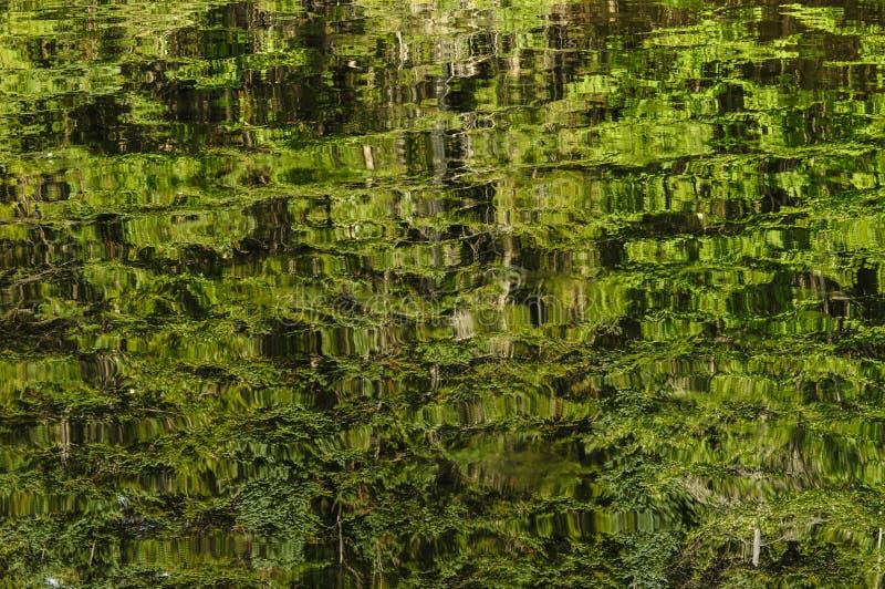 Отражения леса на озере кедр в Adirondack Mountai стоковые фотографии rf
