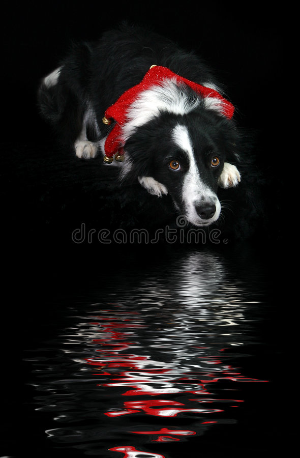 Download отражения праздника стоковое изображение. изображение насчитывающей собака - 75003