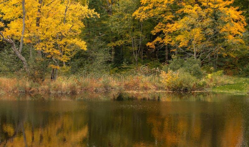 Отражения реки Rosseau стоковое изображение rf