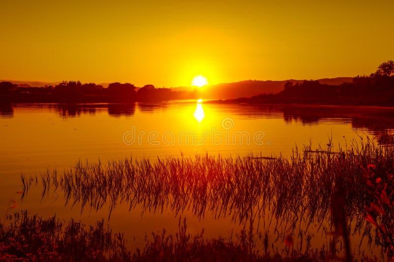 Отражения солнца водорослей солнца озера волны установленного камышового сверхконтрастные стоковые изображения rf