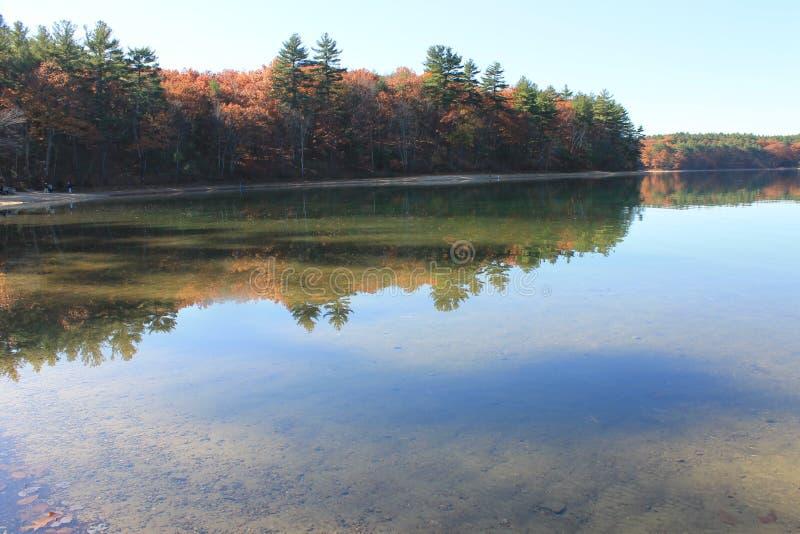 Отражения сосны и фильтрованный солнечный свет в ноябре на пруде Walden 2015 стоковое фото