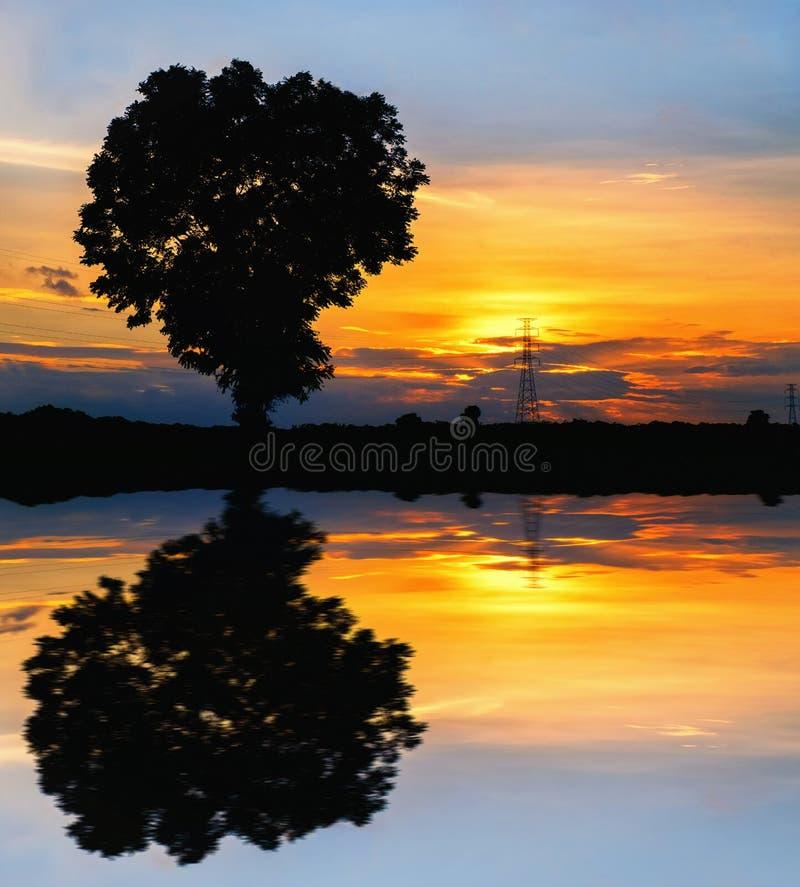 Отразите дерево силуэта и опору электричества высокого напряжения на ti стоковые фотографии rf