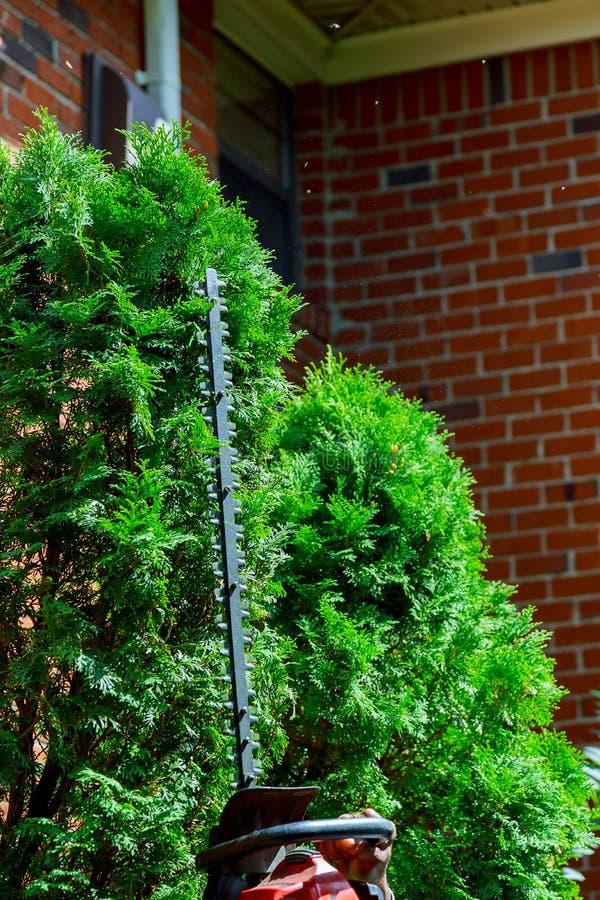 Отрежьте декоративные деревья в саде стоковое фото
